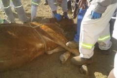 Cattle-Farming-Photos-447